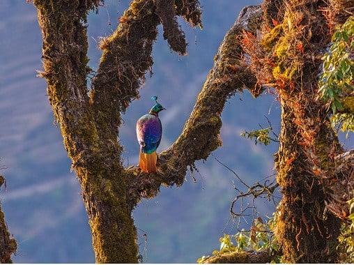 bird watching in munsiyari