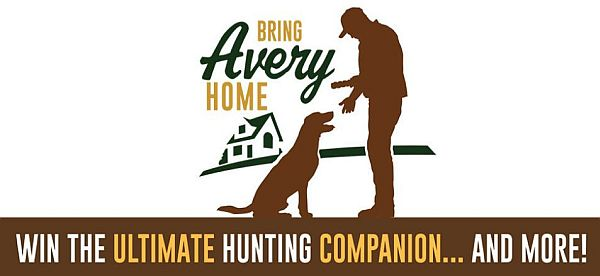 Bring Avery Home Sweepstakes