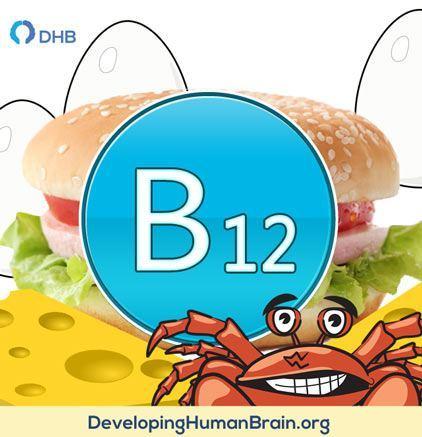 b12 food sources