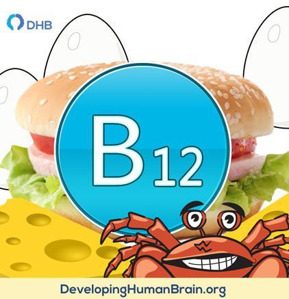 b12 food sources