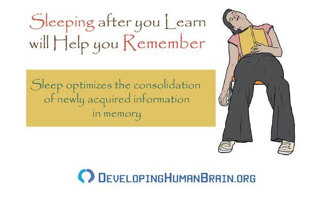 natural memory enhancers