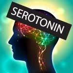 serotonin function