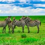 Quand partir pour un safari en Tanzanie?