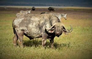 la_nature_sauvage_de_la_tanzanie