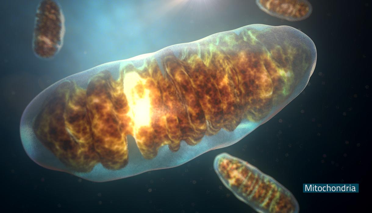 Como gerar um bebê com material genético de 3 pessoas diferentes e o que é a substituição mitocondrial