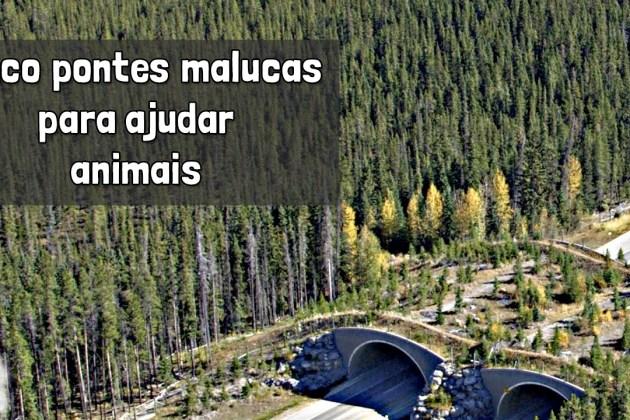 Minuto da Terra: Como as pontes verdes podem salvar os animais?