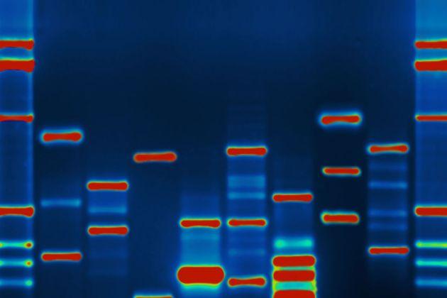 O alfabeto genético e o sentido da vida