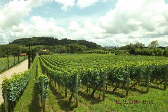 Como driblar a natureza e de quebra tomar um bom vinho