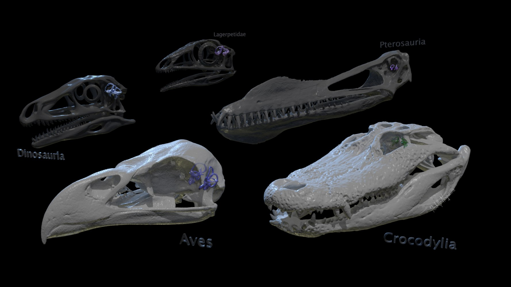 No labirinto dos arcossauros