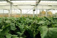 3 Designs That think about The Sci-Fi way forward for Farming In a hundred Years