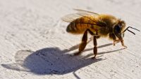 a brand new kind of flora and fauna Sanctuary–For Bees