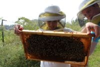 Bee Corp. Aims to Help Beekeepers Fight Colony Collapse Disorder