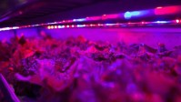 This Vertical Farm Wants To Be An Agriculture Company, Not A Tech Company