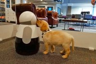 Kuri home robot can tell your pets from people