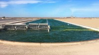 Exxon Thinks It Can Create Biofuel From Algae At Massive Scale