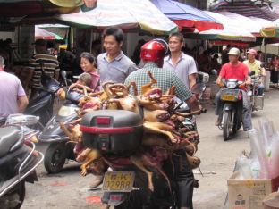 Dogs being delivered to the market