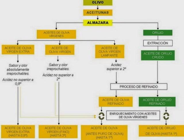 Esquema de la elaboración del Aceite de Oliva. www.aceiteecologico.es