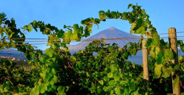 Viñedos con vistas al Teide. Fuente: Bodegas Domínguez Cuarta Generación