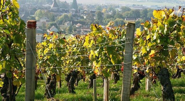 La Borgoña, el final del camino