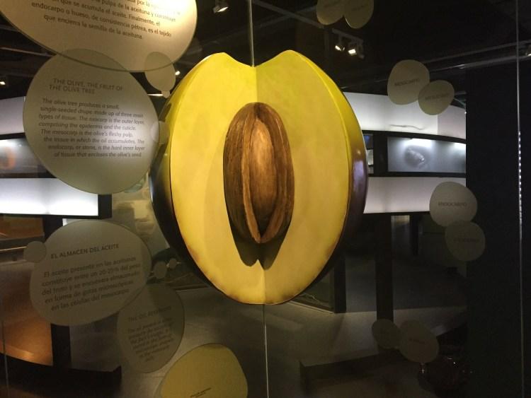devinos-con-alicia-aove-terra-oleum-museo-oliva