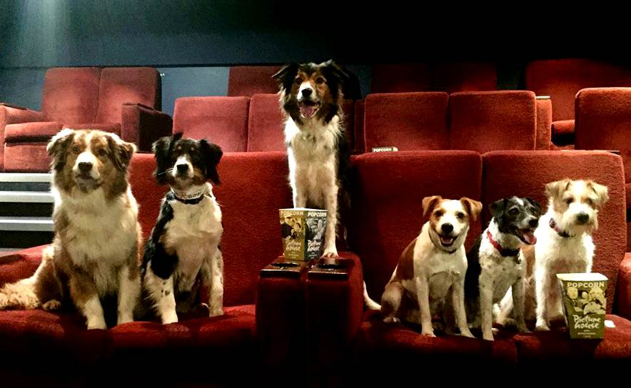 Aisles of dogs... cinema gets dog-friendly screening
