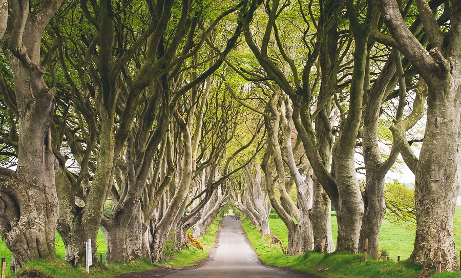 landscape of the dark hedges