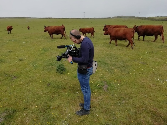 a man with a camera standing in a field of cows