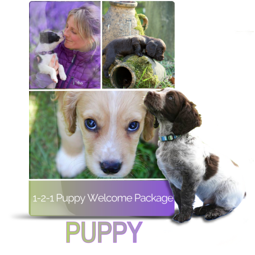 121 puppy welcome package