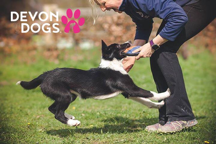 enjoy your dog training journey