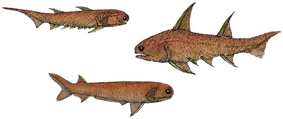 reconstructions of three acanthodians