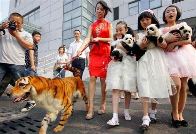 Curiozitati Despre China – 13 Poze Incredibile