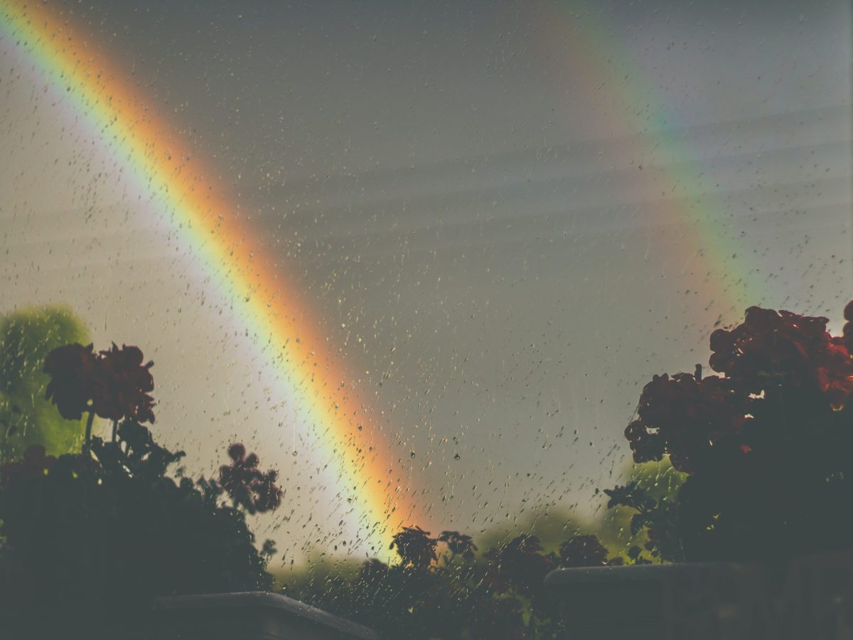 Double rainbow on the skyline, a few tree tops are at the bottom of the image