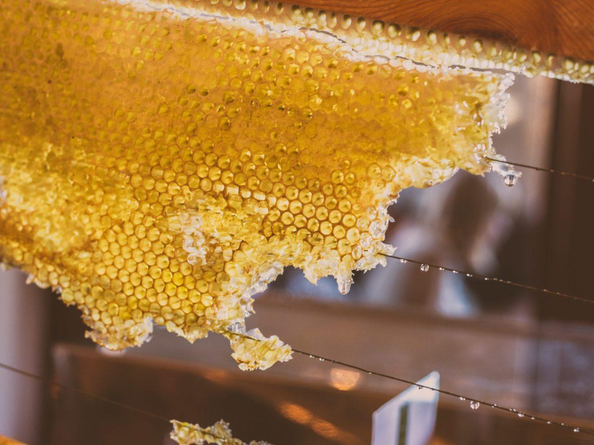 Close up of honey comb