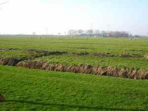 Polder Heenvliet