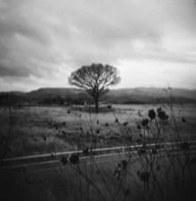 Apr2018 Holga120FN 4 Kodak TriX400_-3