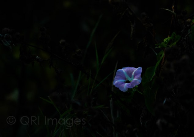 Individual flower in the light