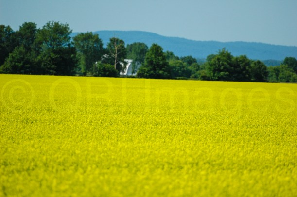 A beautiful field at the foot of the hills (QRI Images - DSLR)