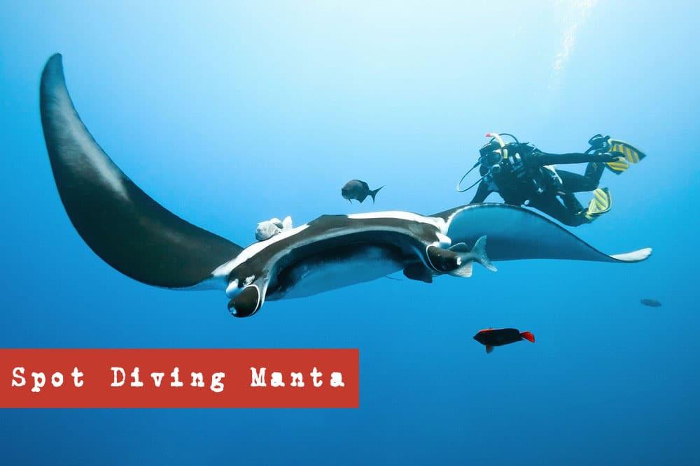 Spot Diving Manta - Tahukah Anda Kelingking Beach Dimana? | Sejarah Pantai Kelingking