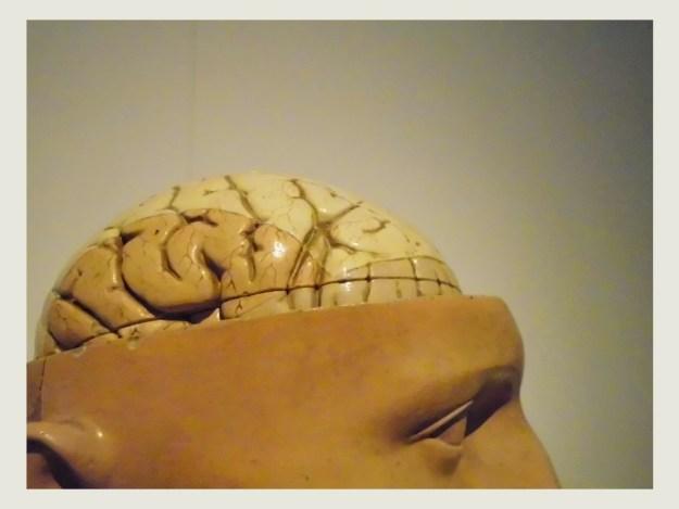 hersenen Guislain museum