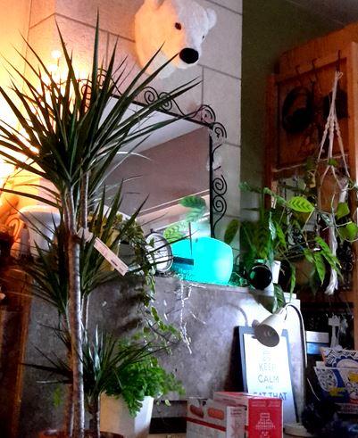 planten in mijn werkkamer