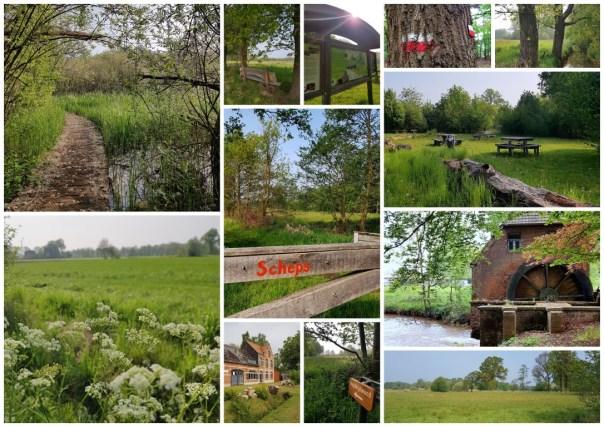 collage natuurgebied Scheps