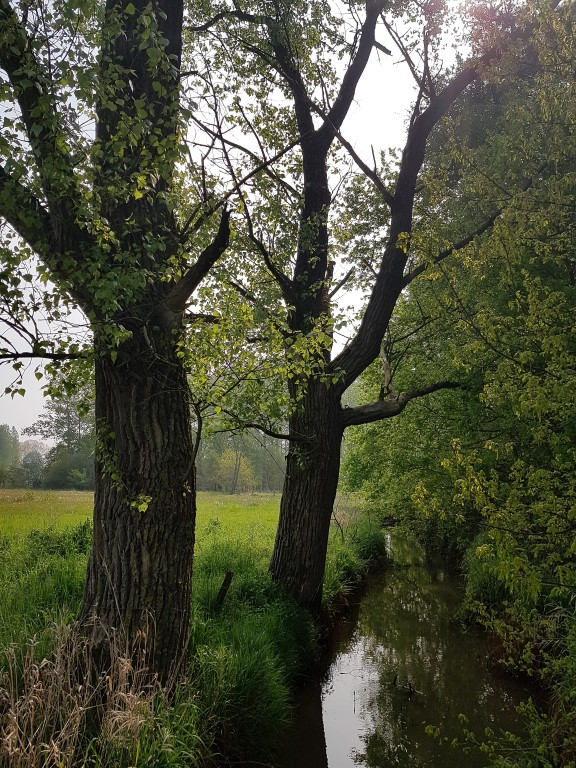 Wandeling  (natuurgebied Scheps)
