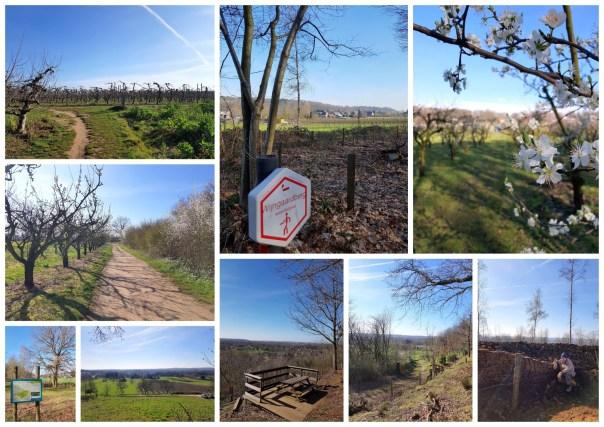 Wijnberg wandeling Wezemaal, collage foto's.