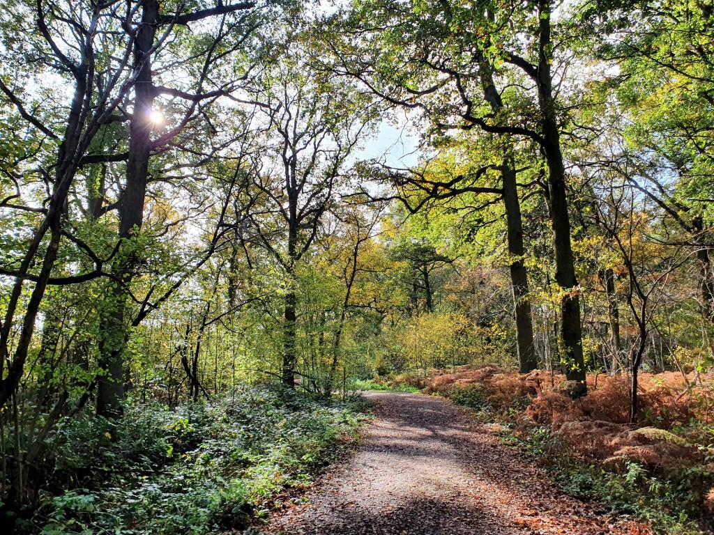 Bos, bos en nog eens bos in Munsterbilzen