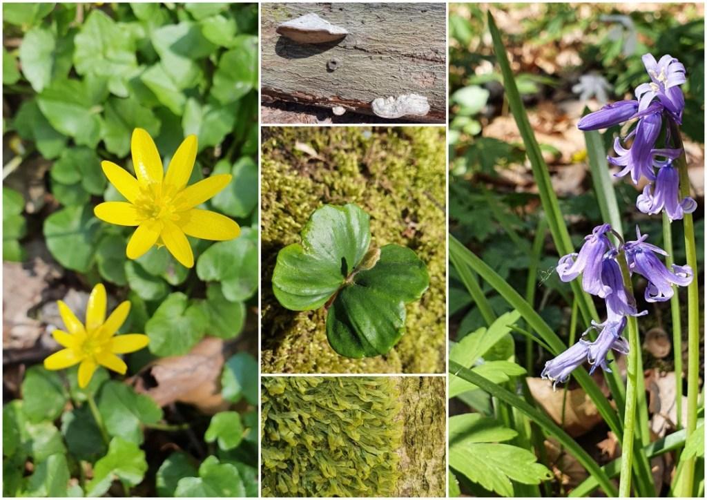 Fauna en flora in Zoniënwoud