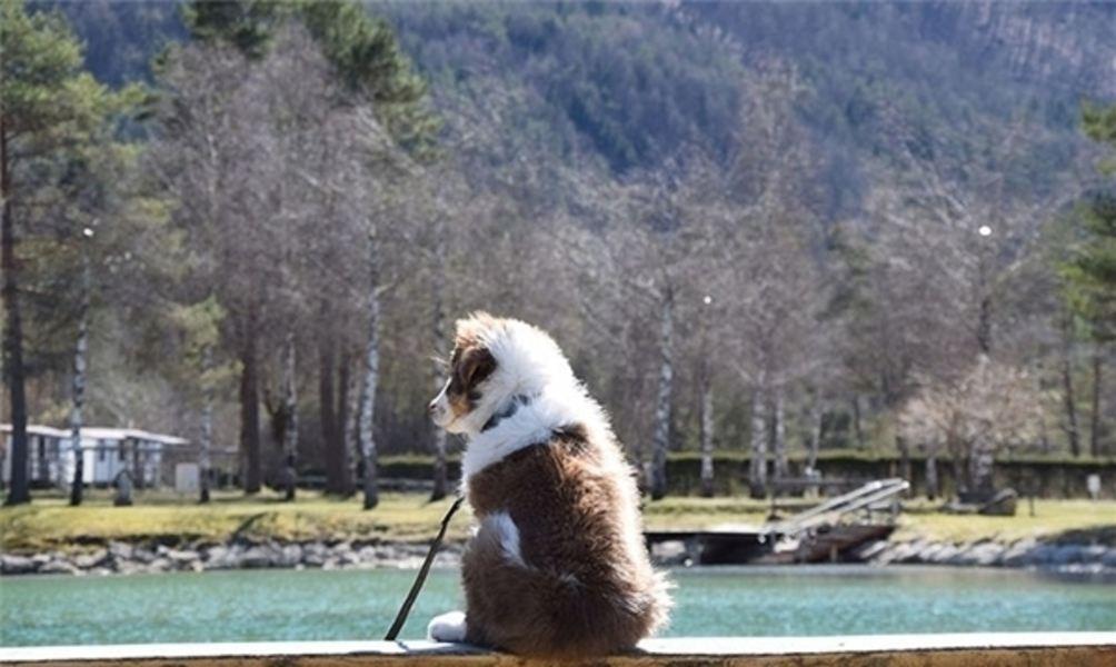 Hundefreundliche Campingplätze in Europa
