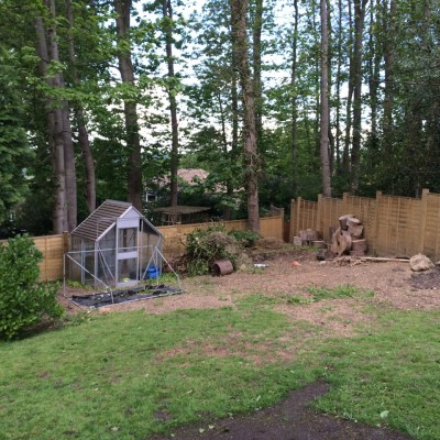 Site of new garden room with woodland backdrop, Littlewood, Sussex
