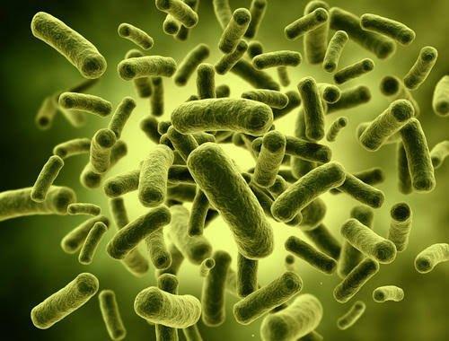 L. acidophilus - Gutamin 7 Reviews