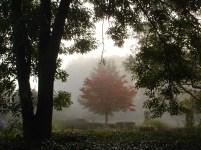De ZintuigenTuin - Seizoen - Herfst (6)