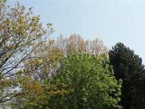 De ZintuigenTuin - Seizoen - Lente (85)